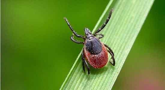 Укусы насекомых клещи фото
