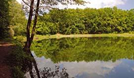 Лесное озеро в селе Глыбокая